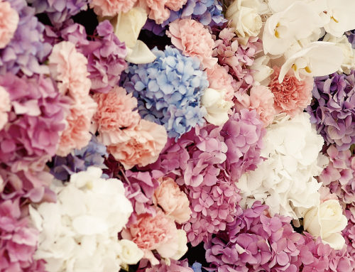 Flower Wall の販売開始
